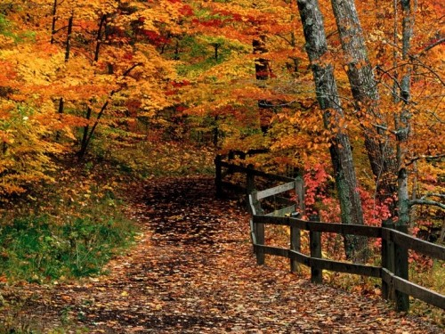fall-trail-with-fence