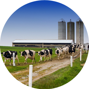 ADAI_Hoosier-Dairy-Farmer-Page_facts-images_dairy-farms.png